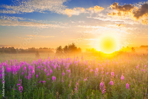 Poster de jardin Orange landscape with sunrise and blossoming meadow