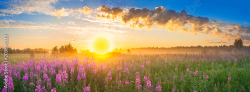 panorama rural landscape with sunrise and blossoming meadow