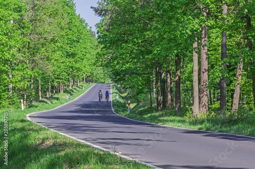 Tuinposter Weg in bos Asfaltowa droga przez las.