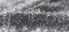 Closeup Detailed View Of Raind...