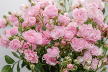 Pink Miniature Roses On White Background