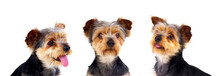 Three Equal Dogs