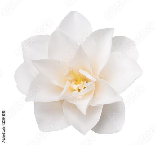Fotografia White Camellia Flower