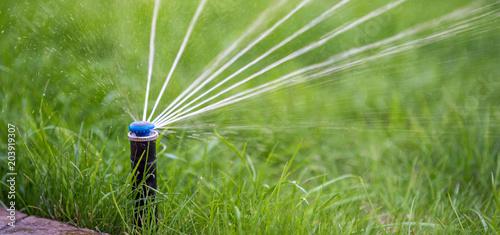 Obraz Sprinkler in action watering grass - fototapety do salonu
