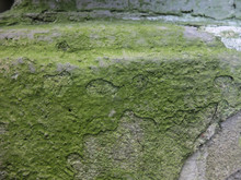 An Old Rusty Wall Of A House With Cracks On Which Moss Grow