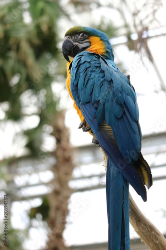 Foto op Canvas Papegaai Big colourful parrot sitting