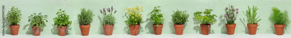 Fototapety, obrazy: Fresh herbs in pots