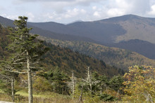 Mountain Beauty, Mount Mitchell State Park In North Carolina
