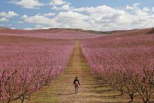 Peach Fields In Pink