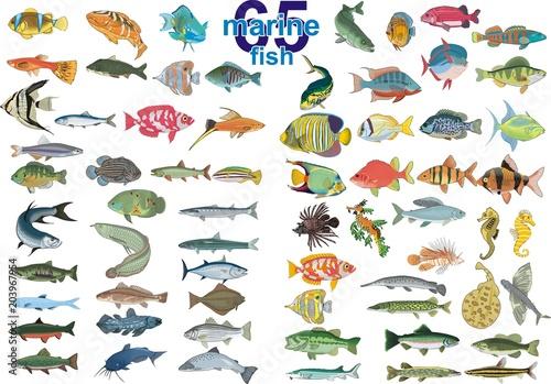 Fotografie, Obraz  Set - marine fishes. In vector form on a transparent background