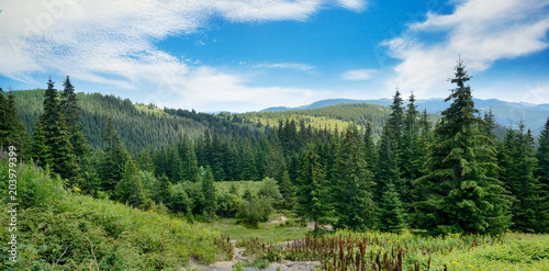 Obraz Picturesque landscape in Carpathians. - fototapety do salonu