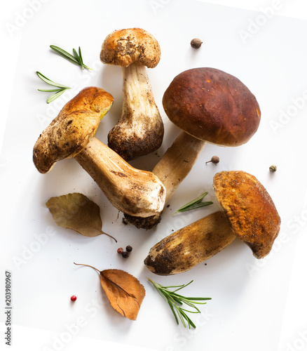 fresh forest mushroom; Italian cooking recipes background