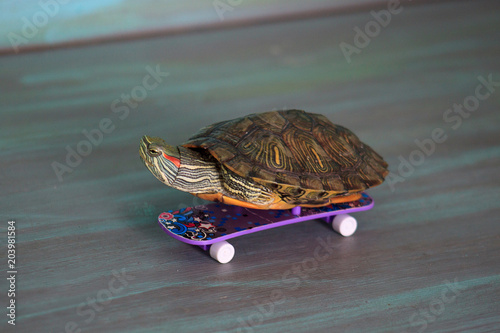 Small manual turtle is riding on a skateboard.
