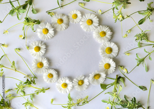 Keuken foto achterwand Bloemen floral pattern, round frame of white chamomiles (daisies) and small wildflowers on white background.flate, top view