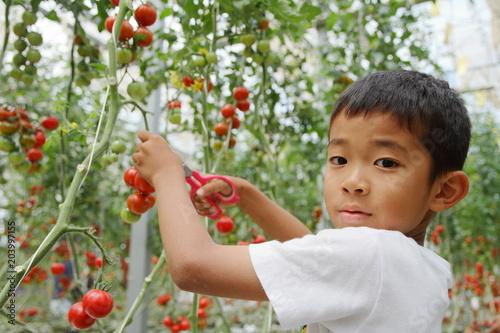 Tuinposter Olijf ミニトマトを摘む小学生(3年生)