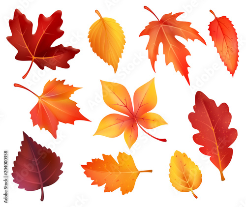 Fototapety, obrazy: Autumn foliage leaf icons of vector falling leaves