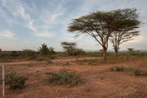 Foto op Aluminium Bleke violet African savannah, brown earth, low green bushes, trees with sprawling crowns.