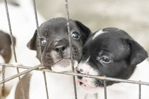 Deurstickers Franse bulldog cub baby dog puppy looking to camera from cage with cute adorable eyes contact outdoor