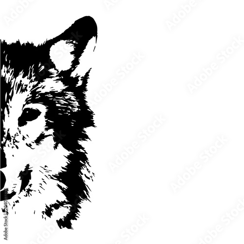 Fotografering  wolf