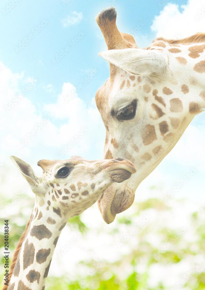 Baby Giraffe and Mom Potrait