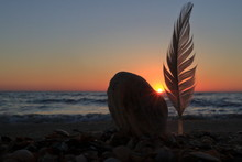 A Shell And A Feather On The Seashore.
