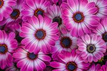 Beautiful Blooming Flowers Of ...