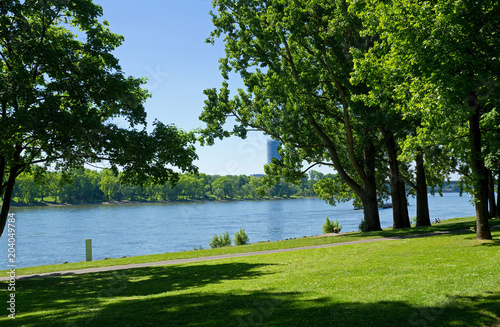 Foto auf Gartenposter Fluss Rheinufer am Bonner Bogen