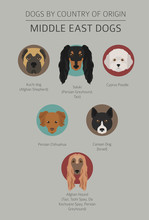Dogs By Country Of Origin. Near East Dog Breeds, Persian Dogs. Infographic Template