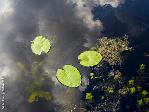 Foto op Canvas Waterlelies Nénuphars en Bretagne