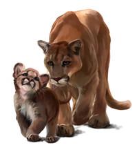 Cougars Watercolor Drawing