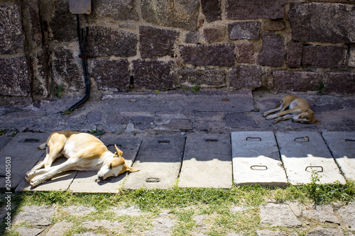 Photo  Two Sleeping Street Dogs Rest by an Ancient Stone Wall at Golconda Fort in Hyder