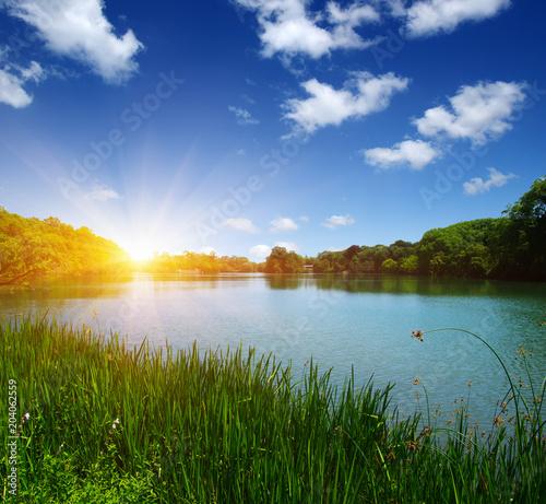 Poster Rivière de la forêt Lake water and sun