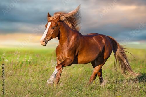 Czerwony koń biega w zielonej łące