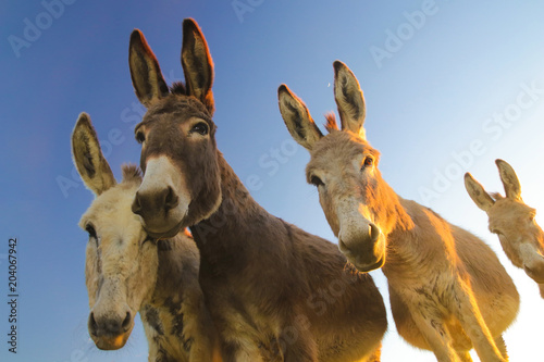 Keuken foto achterwand Ezel Four donkeys with funny faces