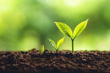 Tree Growth Three Steps In Nat...