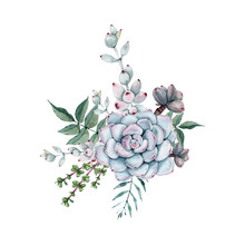 Watercolor Succulent Bouquet. Isolated On White Background.