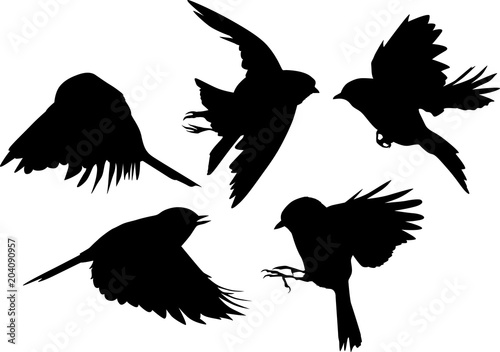 Photo  set of five black flying tits on white