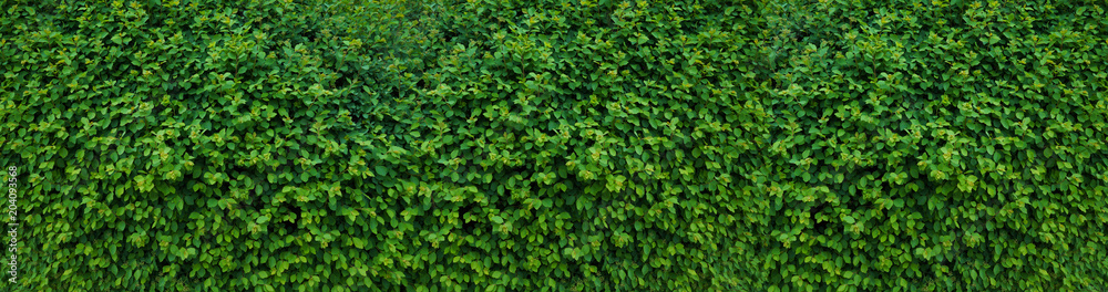 Fototapety, obrazy: Panorama with leaves. Decorative wall with green leaves.