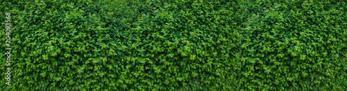 Panorama with leaves. Decorative wall with green leaves. Fototapeta