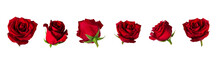 Set Of Six Beautiful Red Rose ...