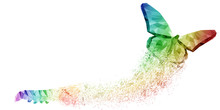 White Background Of Rainbow Butterfly Transformation Liberate Human Right Of LGBT Freedom Concept. Proud And Love To Be. Use To Celebrate Gay Pride, Coming Out Of True Gender And Sexuality Equality