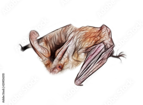Fotografie, Tablou Drawing of bat with huge ears