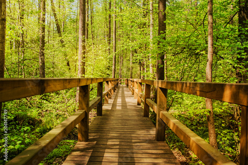 Fotografie, Obraz  Drewno Most w lesie