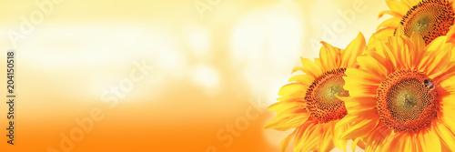 In de dag Zonnebloem Wunderschöne Sonnenblume mit einer Biene