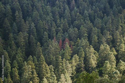 Photo  bosque