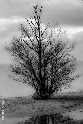 drzewo-na-loughshore