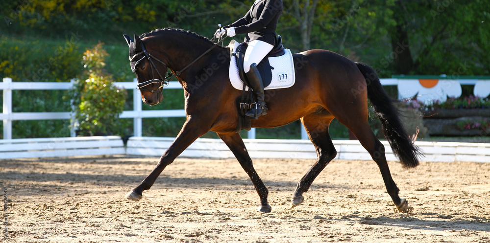 Fototapety, obrazy: Brown horse in portraits during a dressage competition, photographed in the suspended phase with the leg extended..
