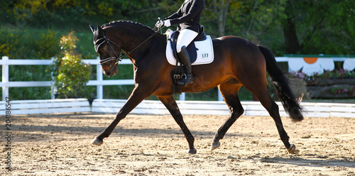 Foto op Canvas Paarden Brown horse in portraits during a dressage competition, photographed in the suspended phase with the leg extended..