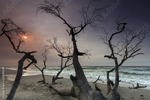 Dead tree at the west beach, evening light, Darss, Fischland-Darss-Zingst, Western Pomerania Lagoon Area National Park, Mecklenburg-Western Pomerania, Baltic Sea, Germany, Europe