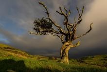 Illuminated Old Tree With Dark...
